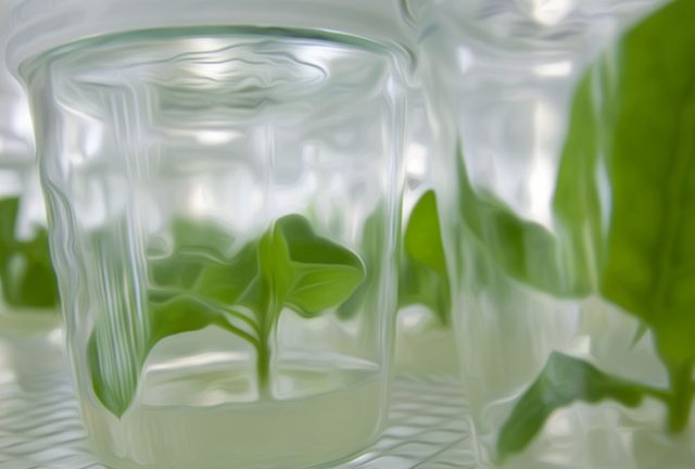 Roots and Shoots – Plant Tissue Culture Workshop – Speculative Life ...